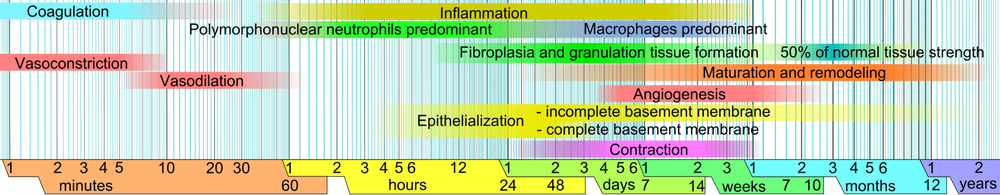 1920px-wound_healing_phases-png.png