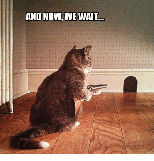 and-now-we-wait-26549877.png