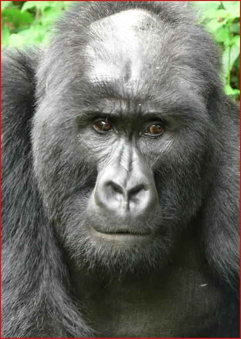 fp_3339655_barm_bald_monkey_073009.jpg